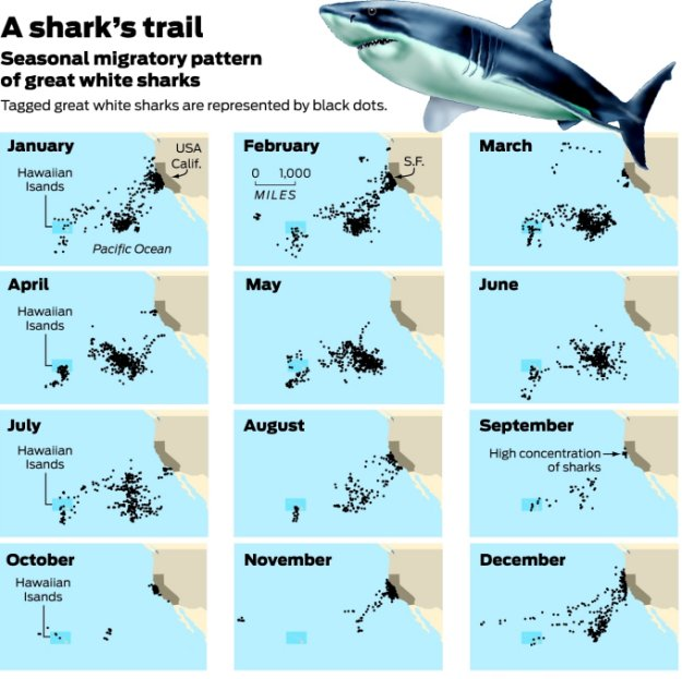 Image Result For Shark Coloring Pages
