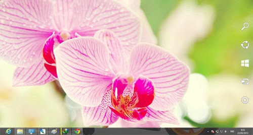 Orchid Flowers 2 Theme For Windows 7 And 8 8.1