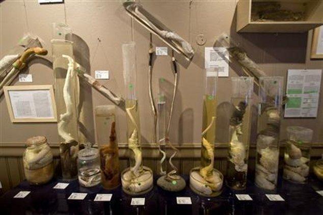 Muzium penis alat kelamin haiwan dan manusia terkumpul di sini