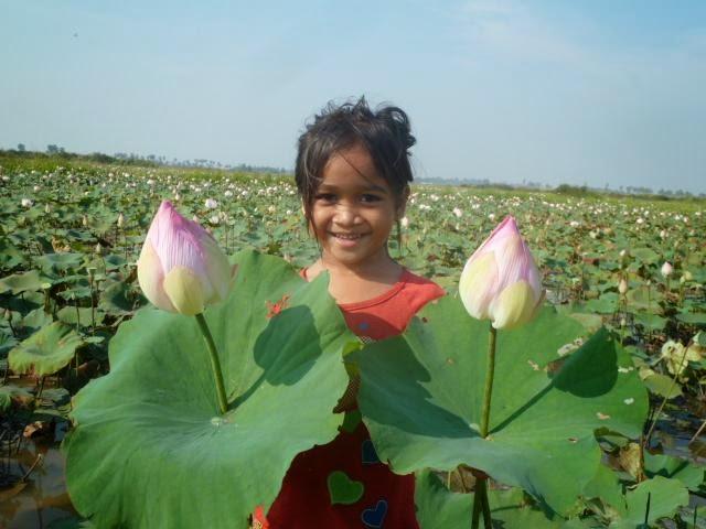 Cambodian lotus