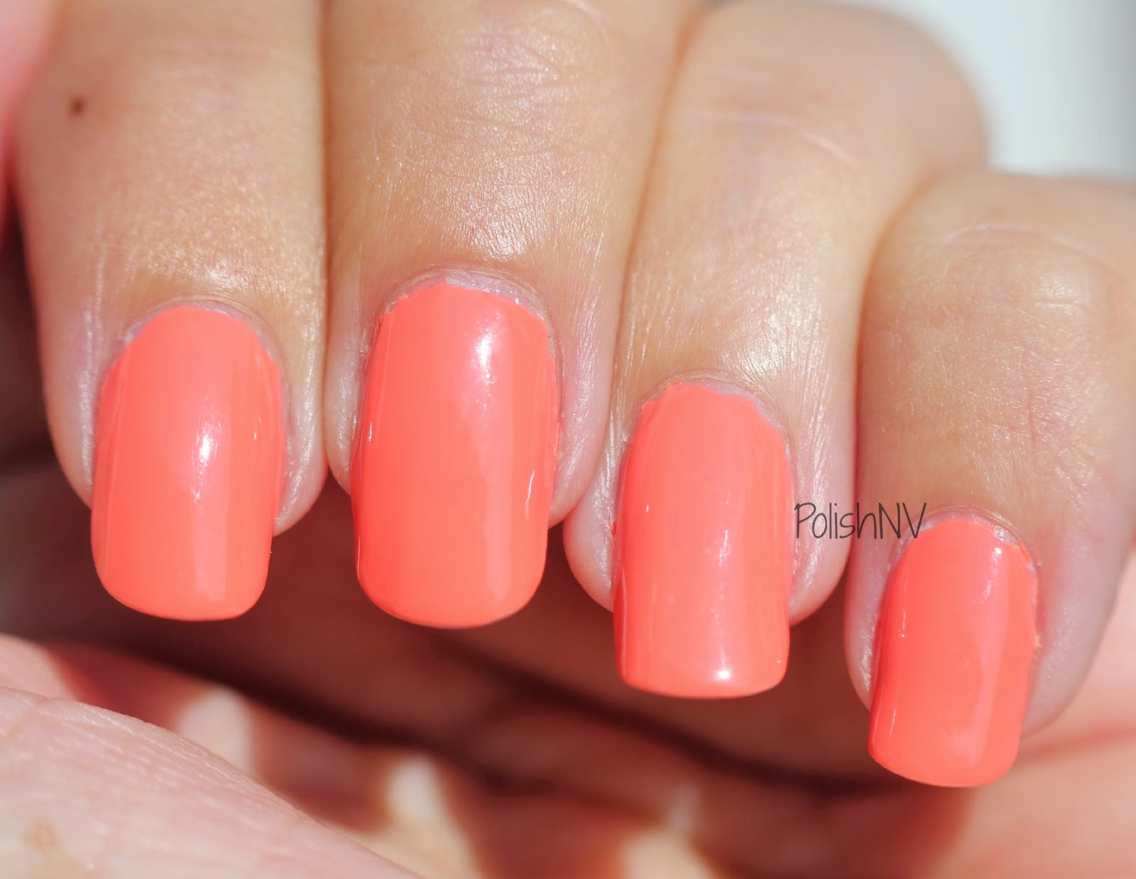 barry m gelly papaya