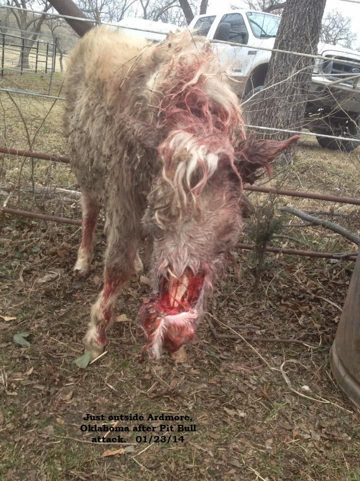 The full report which tallies the North American dog attacks by breed ...