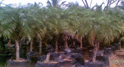Ingenieria verde te ofrecemos for Plantaciones verticales