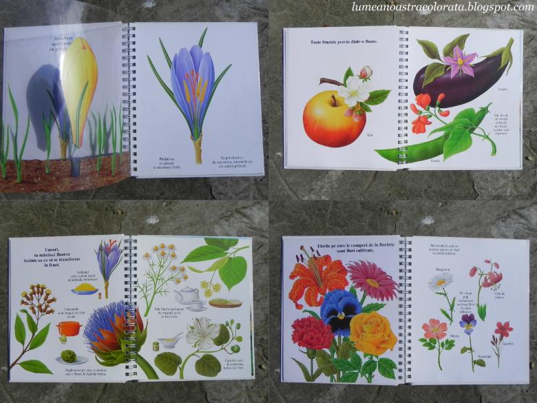 Floarea, colectia Primele mele descoperiri, editura Erc Press