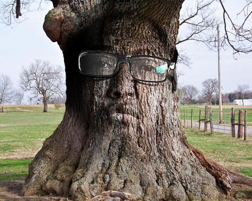 Merol's Blog: Cara Memanipulasi Wajah ke Pohon Dengan Photoshop