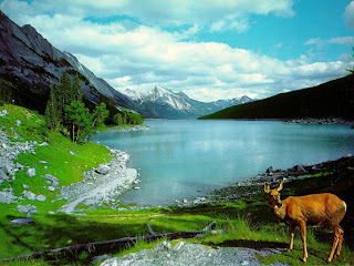 Nature Wallpapers Desktop