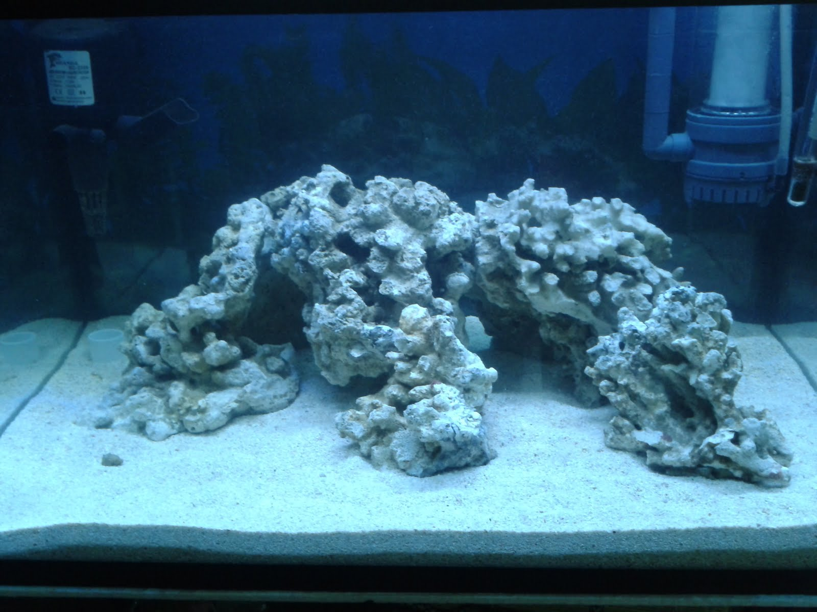 S c a r l e t Reef: Day 11 (9/6/2011): New aquascape