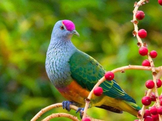 Aves hermosas mundo
