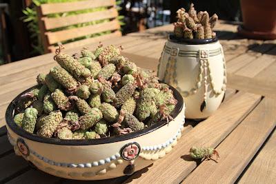 Weller Pearl and Lavandula stoechas Dried Flower Spikes