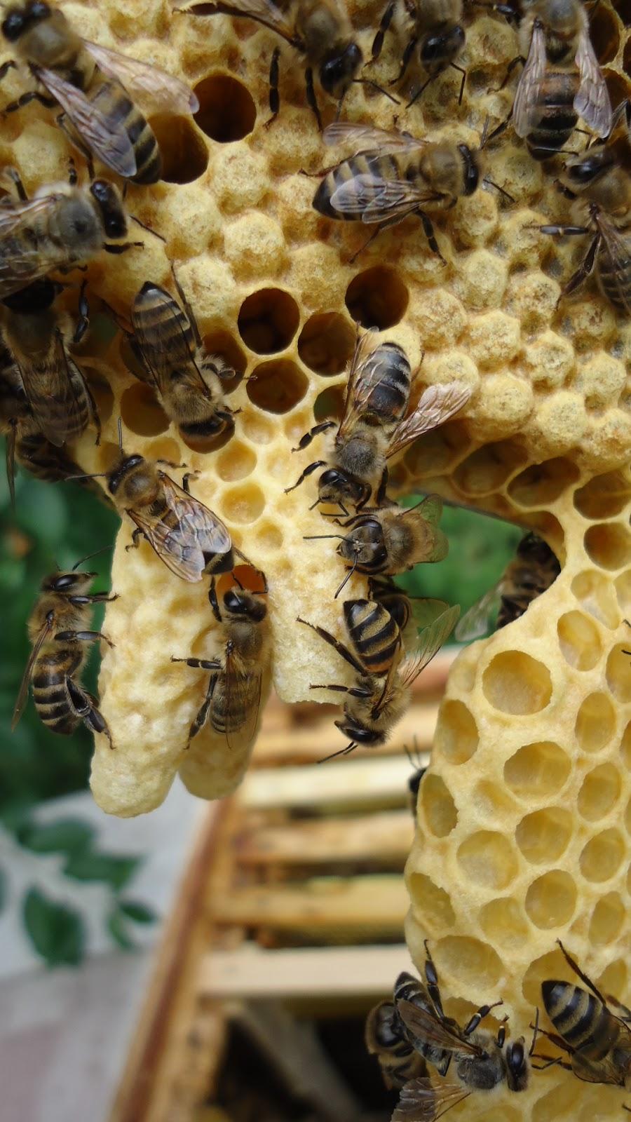 Как сделать отводок пчел Пасека. Пчелы. Мёд 97