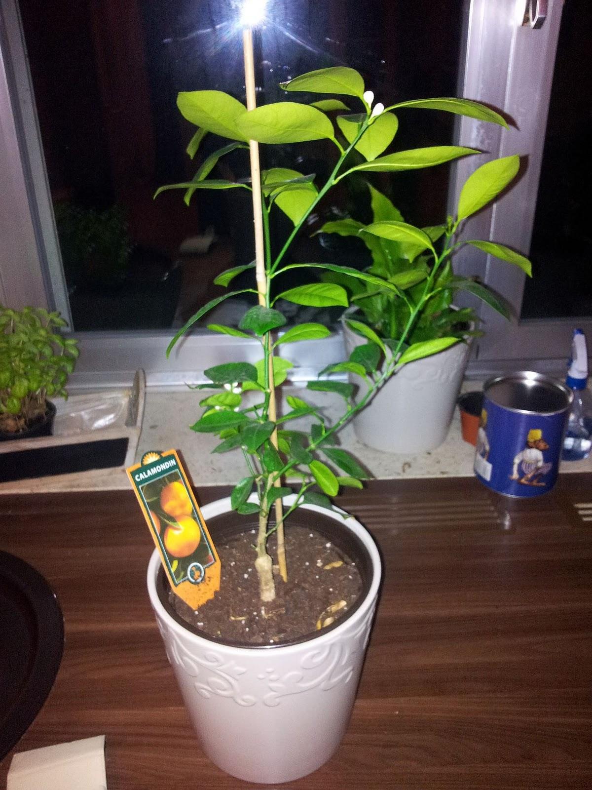 Zimmerpflanzen tagebuch - Standort zimmerpflanzen ...