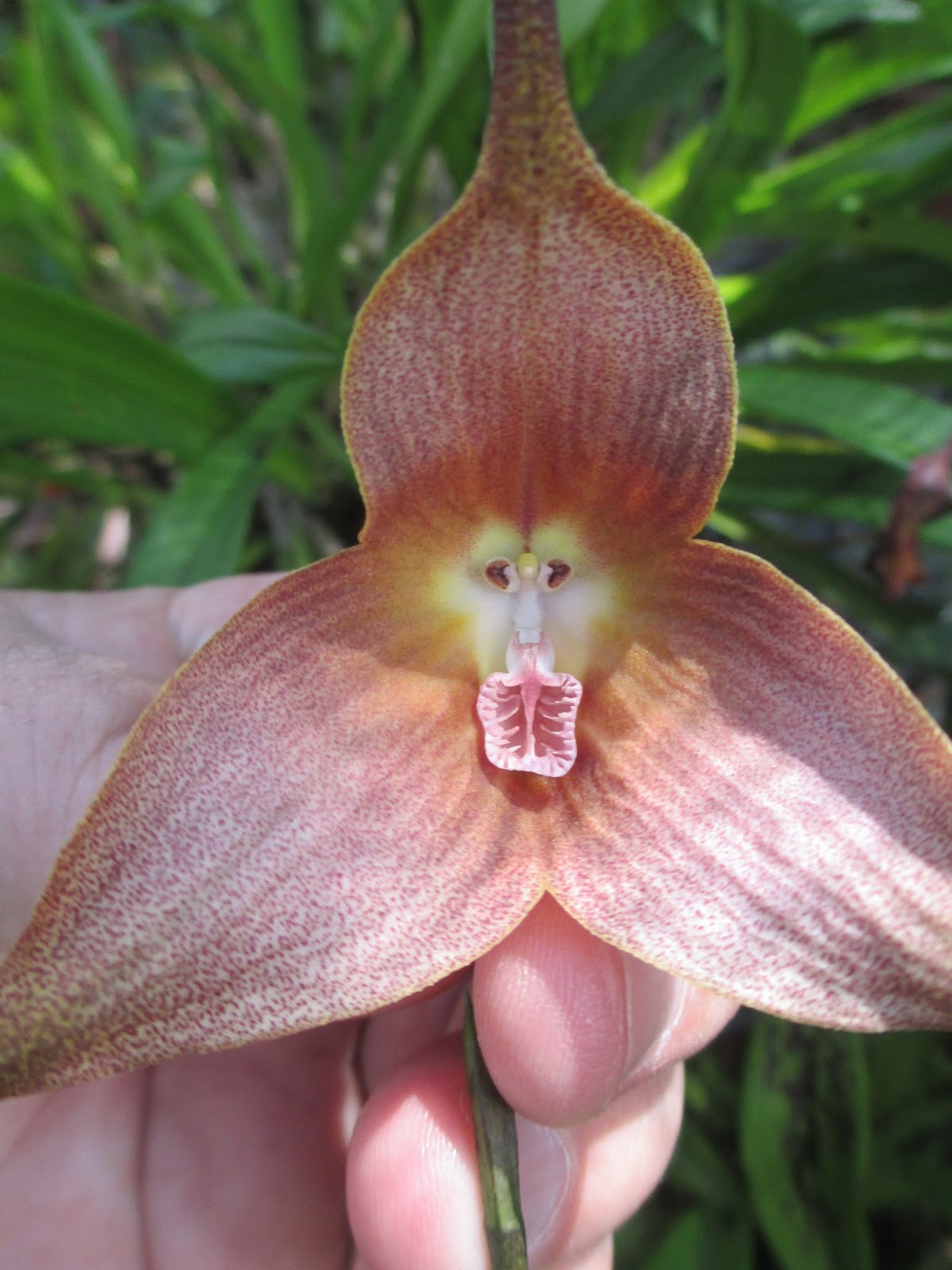 Do you see a devil in this orchid? : TreeHugger