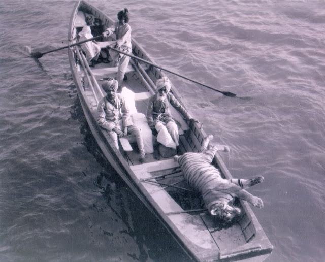 Tiger-Shoot-on-river-Chambal-1952-b