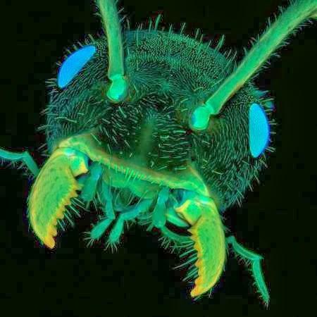10 صور مجهرية مذهلة A98289_ant-head
