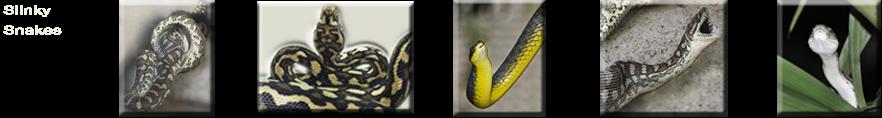 Slinky Snakes