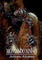 LIBRO PDF - MONTANDO NINFAS