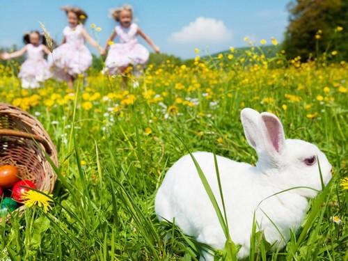 White Easter Rabbit Wallpapers