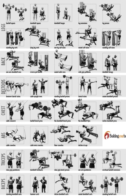 ... WEIGHT TRAINING EXERCISE FOR WHOLE BODY/GENERAL BODY WEIGHT TRANING