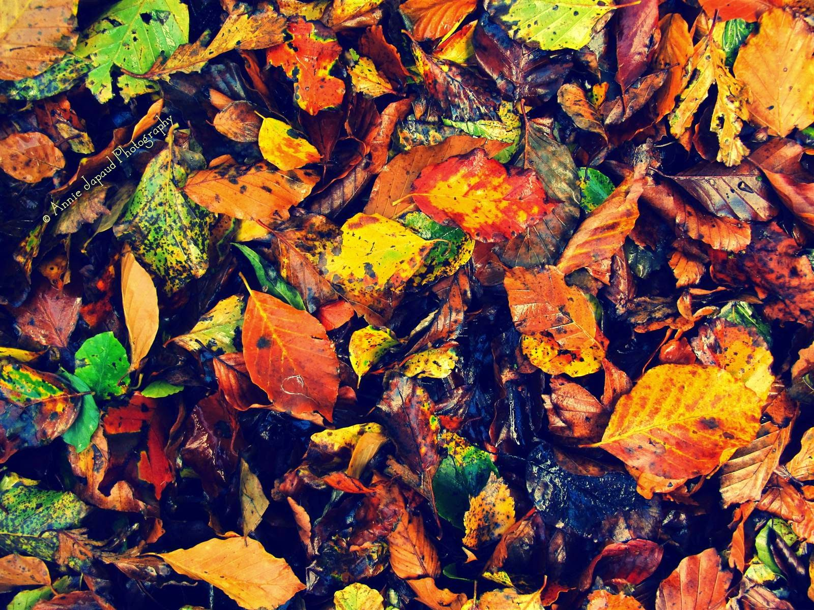 leaves, autumn colours
