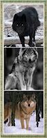 Lobos del Sami