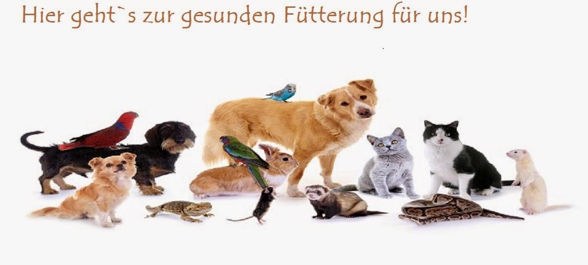 http://www.tierheilkundezentrum.info/index.php