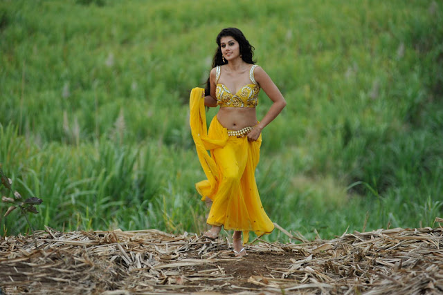 tapsee new spicy saree in mogudu actress pics