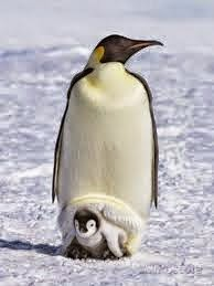 clicca sul pinguino per aprire gli album dei miei viaggi nel mondo