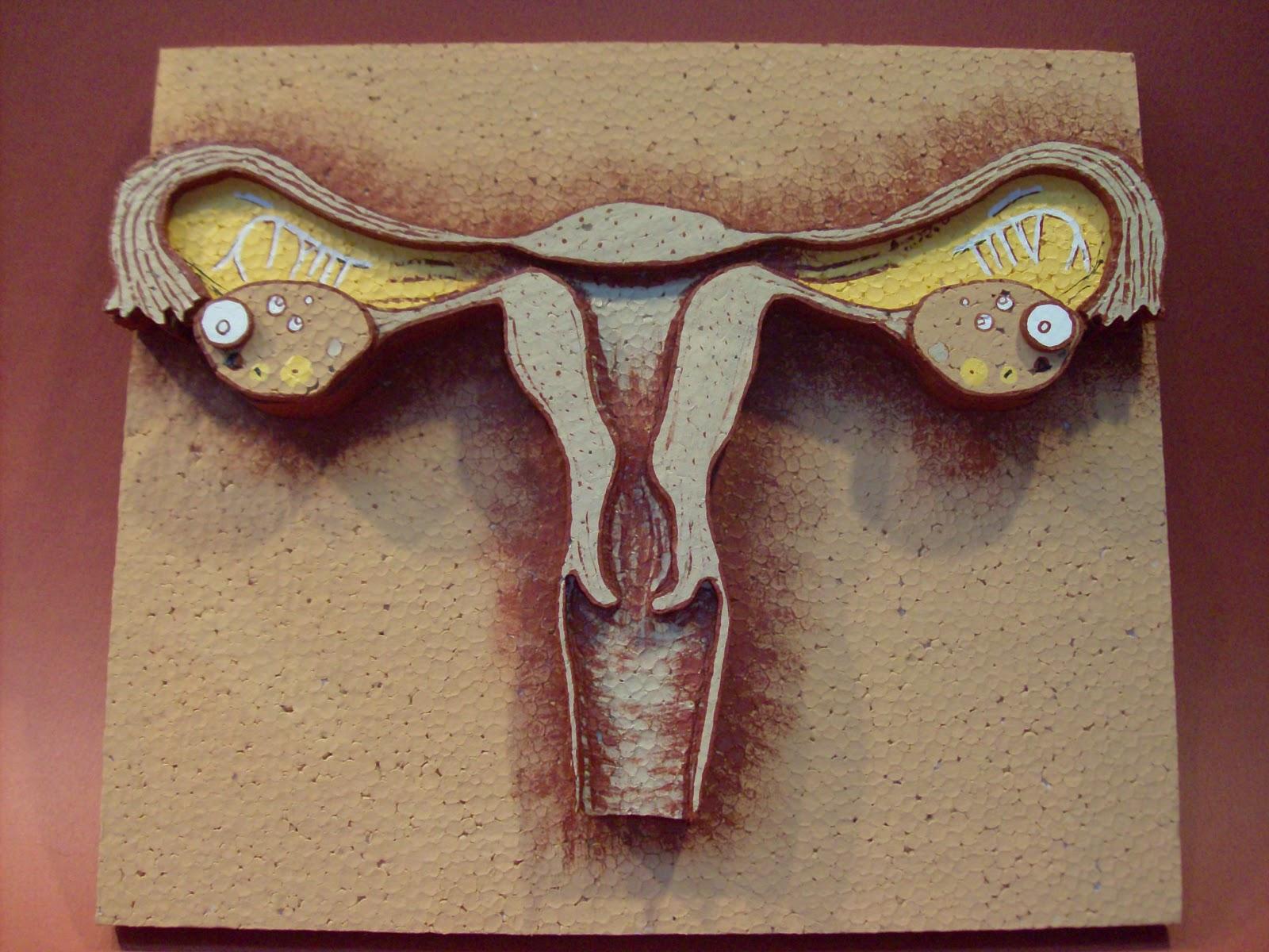 Aparato Reproductor Femenino Y Masculino