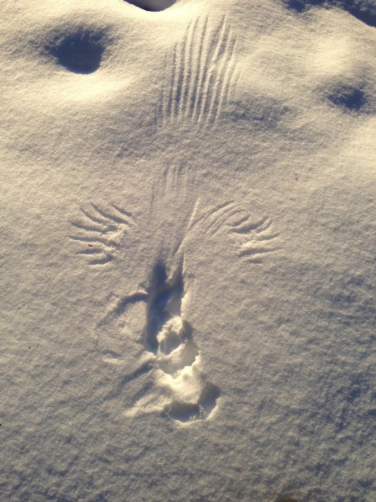 remote captures bird print on the snow