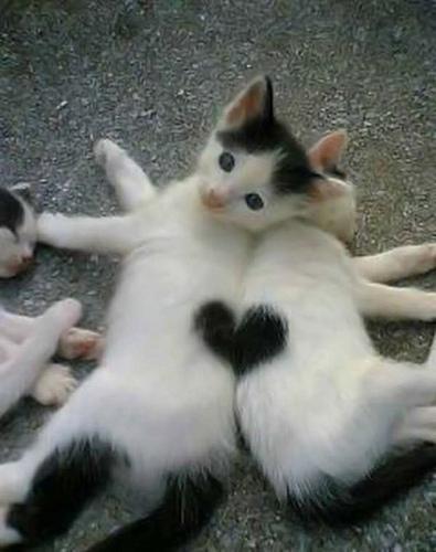 αγάπη-γατούλα-love-animals