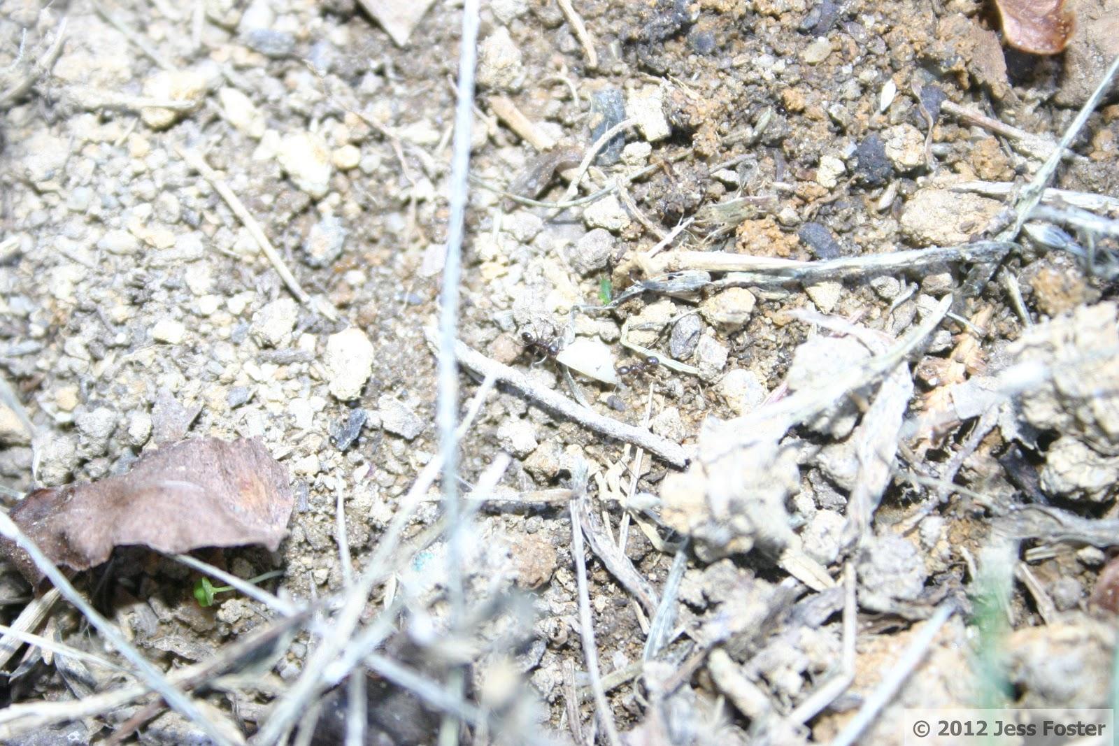 Sluggin' Along: To Be an Ant: The Treacherous Journey