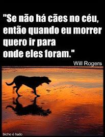 Cães...
