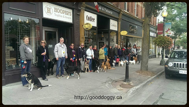 Image: Good Doggy Pack Walk