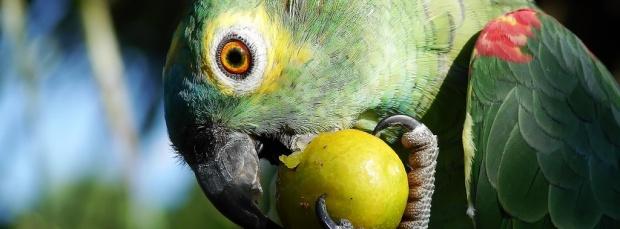 guzel kus facebook kapak resimleri+%252831%2529 35 En Güzel Facebook Kuş Kapak Resimleri indir