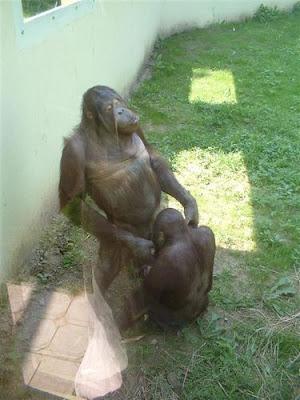Sete motivos para não levar seu filho ao Zoológico