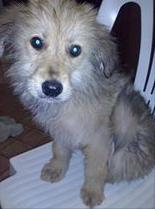 stallo adozione Firenze cucciolo