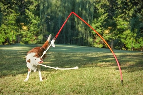Yard Toys For Dogs : Blueridgepetcenter the tether tug dog toy for