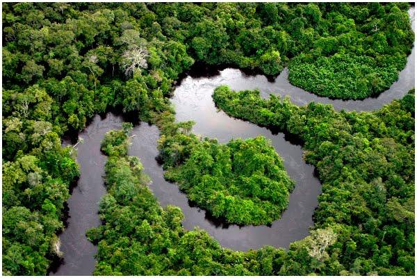 Amazon Petites Plantes De Decoration Pour Mettre Ds La Cuisine