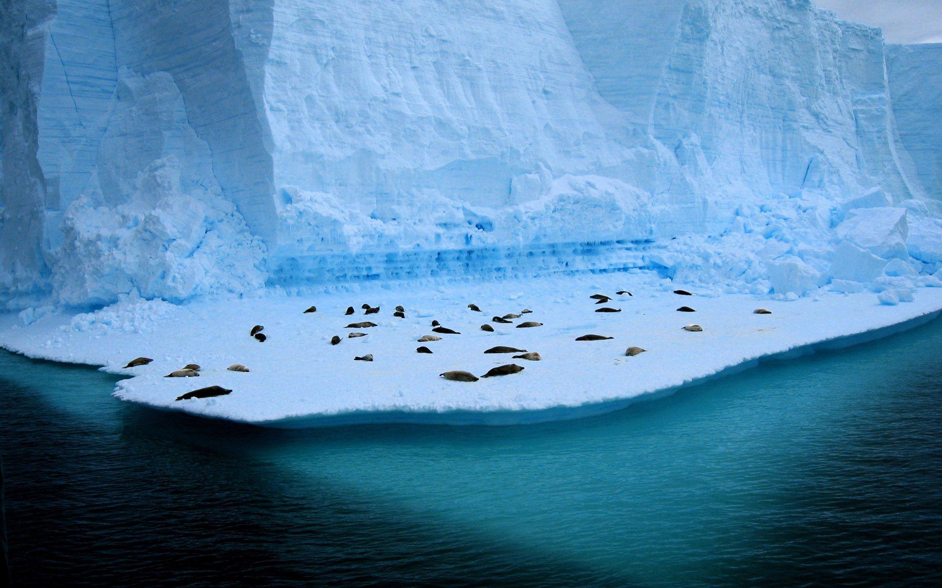 Seals Relaxing Wallpaper