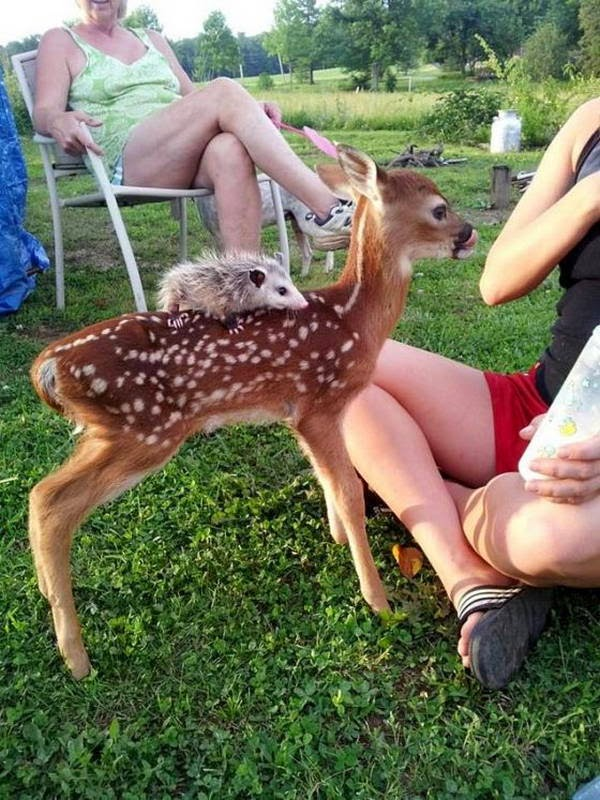 Funny animals of the week - 10 October 2014 (40 pics), funny animal, animal photo