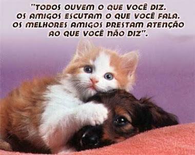 Respeito aos animais !!!