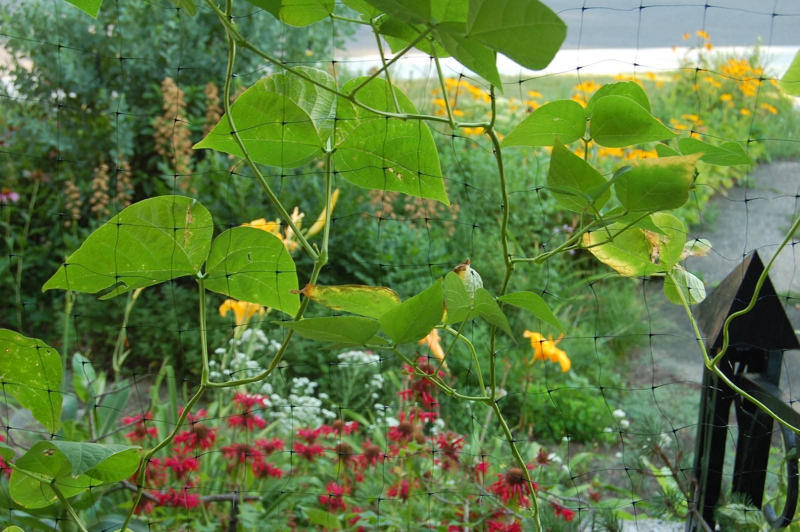 Jardins au Québec: Des plates-bandes comestibles et riches en ...