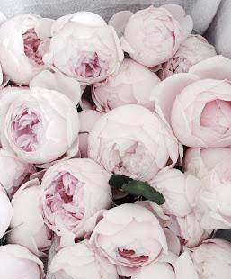 Seawashed Roses