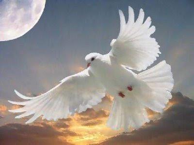 Burung merpati atau burung dara merupakan burung peliharaan istimewa