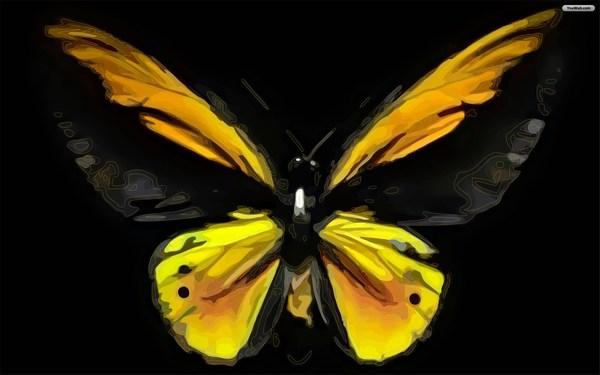 Black Yellow Beautiful Butterfly Wallpaper