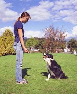 Como Educar A Un Perro Facilmente