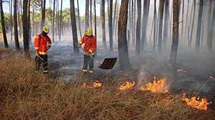 Queimadas em MS: 80% dos incêndios são combatidos 'no braço' por bombeiros
