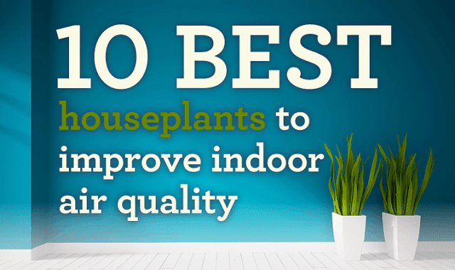 10 best plants to improve indoor air quality infographic for Interior design and indoor air quality