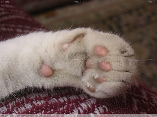 Que significa soñar con pata de gato