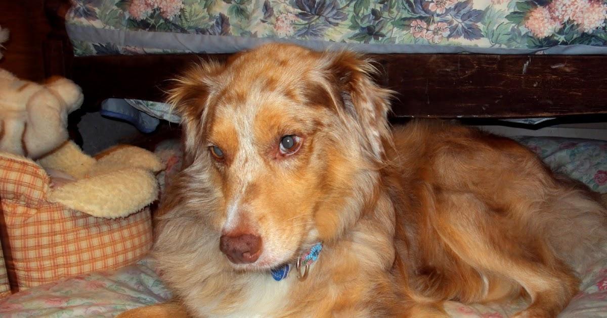 Reconcile Dog Prozac